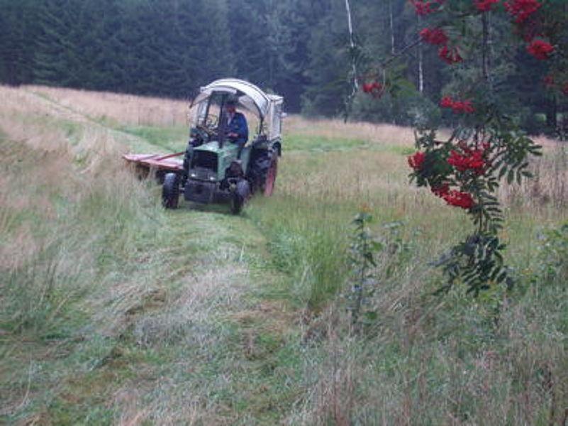 Wiesenmahd ohne Düngung auf einer Bergwiese mit Bär-wurz und Knabenkraut in Hohenbrand bei Nagel.